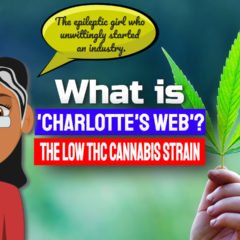 """Featured image text: """"What is Charlotte's web?""""."""
