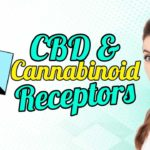 """Featured image text: """"CBD and Cannabinoid Receptors""""."""
