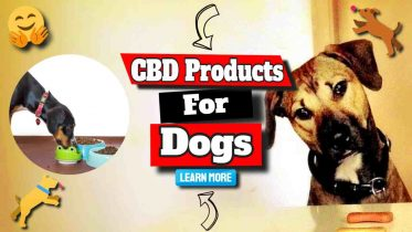 """Image text: """"CBD products for Dogs""""."""
