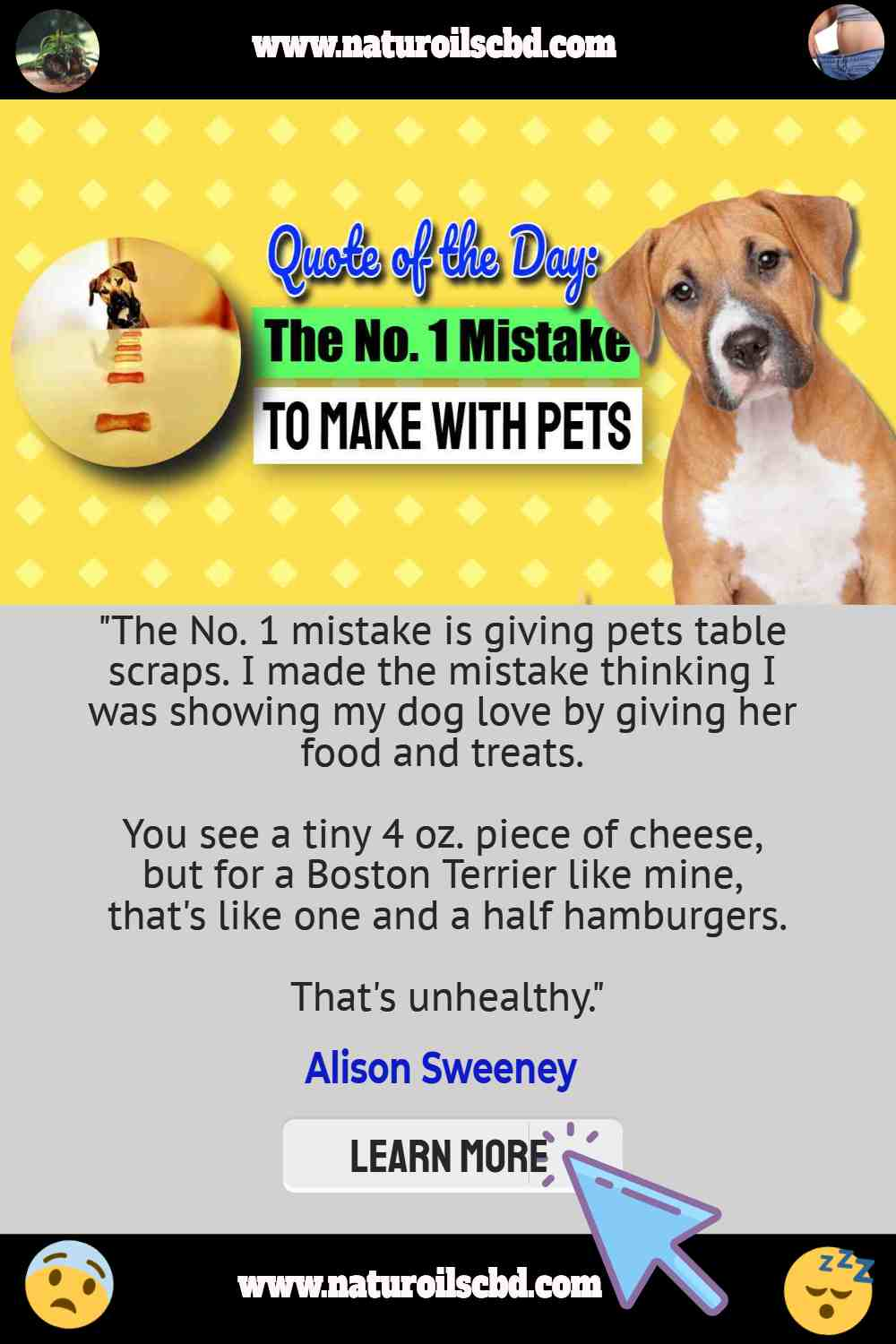 """Image text says: """"The No. 1 mistake is giving pets table scraps""""."""