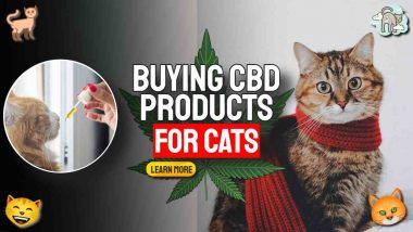 """Image text: """"Buying CBD for Cats""""."""